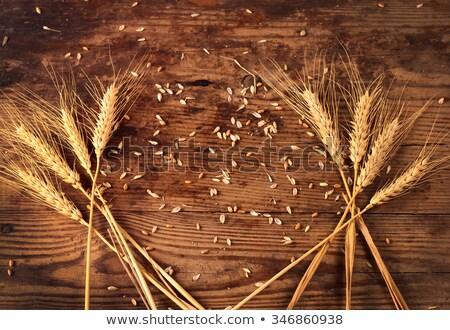 gouden · tarwe · granen · stilleven · hout · natuur - stockfoto © lunamarina