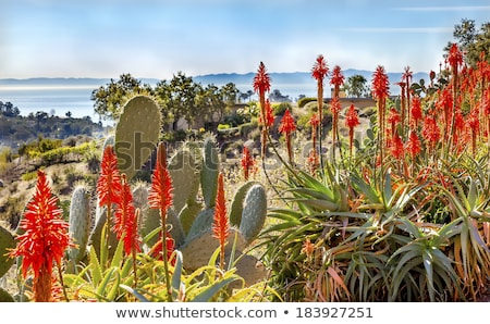 Stock photo: Morning Pacific Ocean Landscape Channel Islands Santa Barbara, C