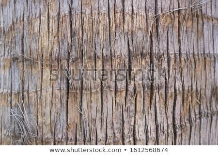 Kokosnoot boom schors grunge textuur muur ontwerp Stockfoto © Kheat
