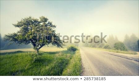 gyönyörű · öreg · fák · mocsár · víz · tavasz - stock fotó © julietphotography