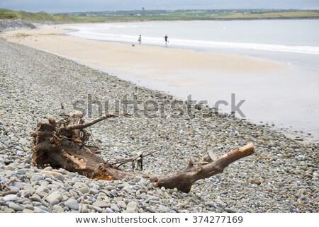 Troncos praia céu água nuvens oceano Foto stock © morrbyte