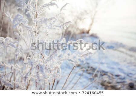winter morning view to frozen lake stock photo © juhku