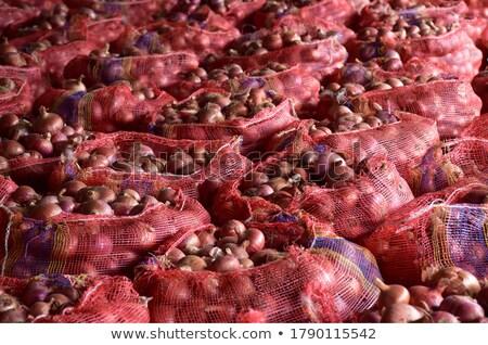vermelho · cebolas · jardim · fazenda · outono · agricultura - foto stock © lio22