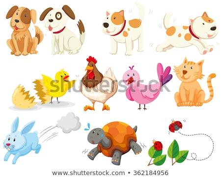ストックフォト: 子犬 · 子猫 · ひよこ · 白 · 猫 · 友達