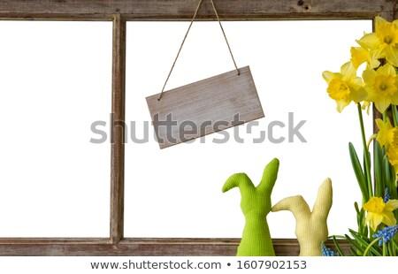 空っぽ 黄色 水仙 花 花 ストックフォト © Zerbor