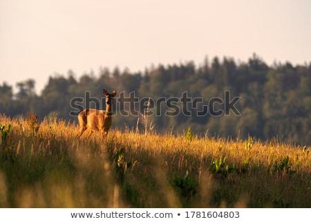 Zöld fű természet háttér sivatag zöld férfi Stock fotó © master1305