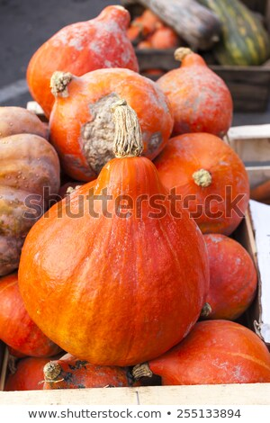 pumpkins market in forcalquier provence france stock photo © phbcz