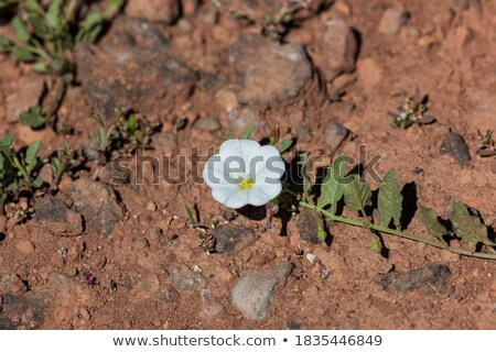 Small flowers growing in harsh rock Stock photo © backyardproductions