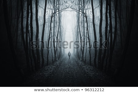 Darkness night and fog with tree background. Stock photo © Kheat
