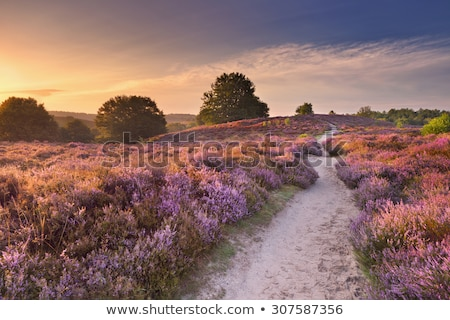 области · цветок · розовый · луговой - Сток-фото © ivonnewierink