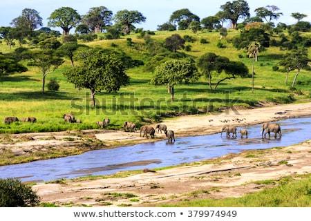 Elefánt Serengeti park fa nap naplemente Stock fotó © meinzahn