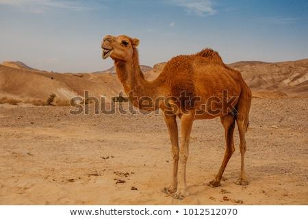 Kaya deve ağaç cam kum şişe Stok fotoğraf © zurijeta