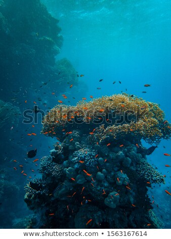Fish swimming around the coral reef Stock photo © bluering