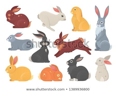 Rabbit character Stock photo © solarseven