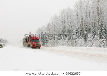 logging road in winter Stock photo © pictureguy