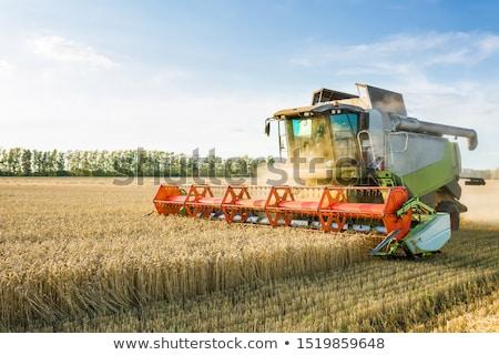 машина зрелый пшеницы зерновые культурный Сток-фото © stevanovicigor