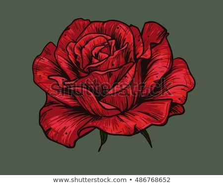Róż sztylet czerwony piękna różowy jedwabiu Zdjęcia stock © SRNR