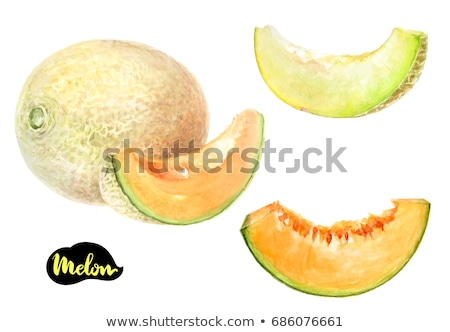 Couleur pour aquarelle illustration melon peinture Photo stock © Sonya_illustrations