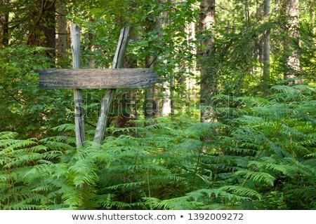 木 跡象 樹林 插圖 紙 房子 商業照片 © colematt