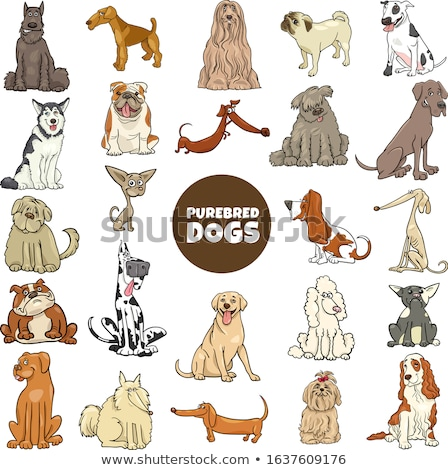 funny great dane dog cartoon character Stok fotoğraf © izakowski