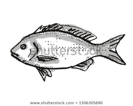 Blue Drummer Australian Fish Cartoon Retro Drawing Stock photo © patrimonio