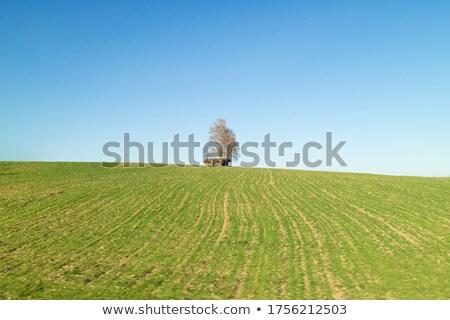 Solo árbol casa verde cielo azul Austria Foto stock © artjazz