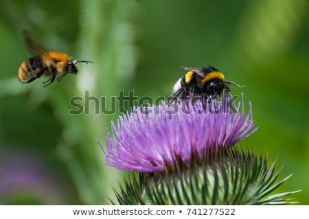 Poszméh közelkép rovar fej citromsárga láb Stock fotó © gewoldi