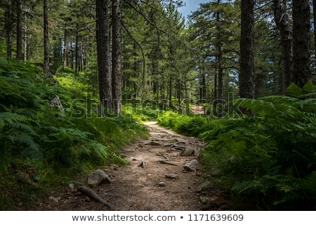 лес · рассвета · солнечный · свет · туманный · осень - Сток-фото © pzaxe