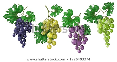 Stock photo: The big set of the different fruits