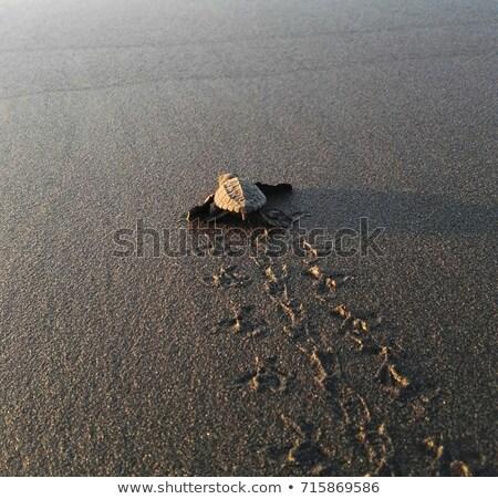 barbatana · areia · pegadas · natureza · fundo - foto stock © ElinaManninen