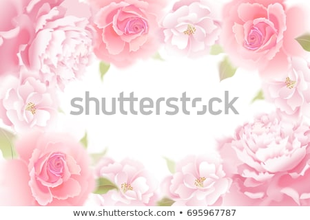Pink rose background, vector illustration Stock photo © carodi