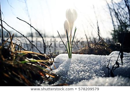 小さな · 春 · 葉 · 空 · 青空 · コピースペース - ストックフォト © franky242