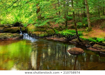 waterfall on small forest river in ontario stock photo © cmeder