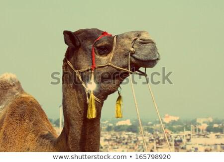 Teve fesztivál klasszikus retró stílus vásár India Stock fotó © Mikko