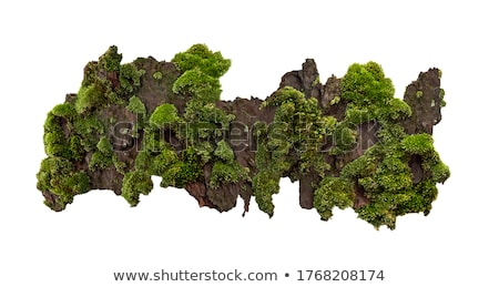 Musgo outono sazonal floresta fundo Foto stock © Anterovium