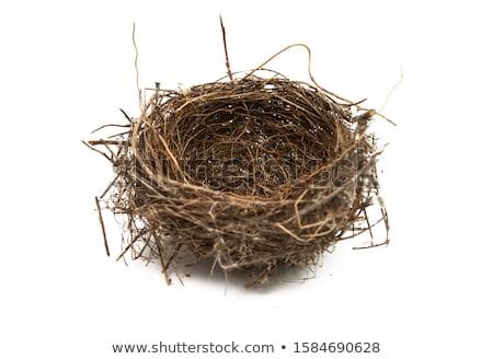 Stockfoto: Vogels · nest · ei · geïsoleerd · witte · gras