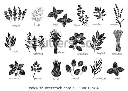 Aromás levelek izolált fehér kivágás levél Stock fotó © natika