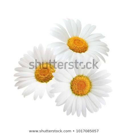 じょうろ · 花柄 · 小 · 孤立した · 白 · 水 - ストックフォト © zhekos