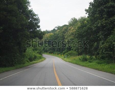 Driving through a clear cut forest stock photo © olandsfokus