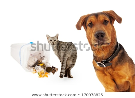 Macska kutya kutyák csemegék étel padló Stock fotó © AlphaBaby