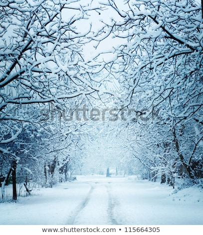 winter landscape a cloudy day stock photo © kotenko