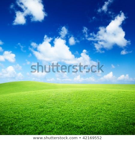 Veld gras perfect blauwe hemel voorjaar hout Stockfoto © tetkoren