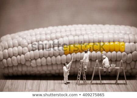 miniature painters coloring corn on the cob stock photo © kirill_m