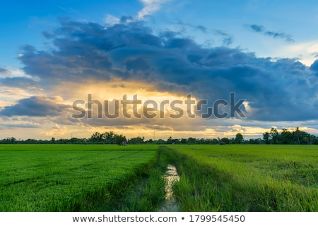 green wheat field and blue sky stock photo © karandaev