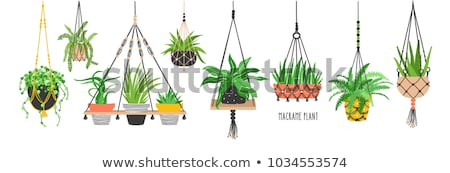 A hanging plant Stock photo © bluering