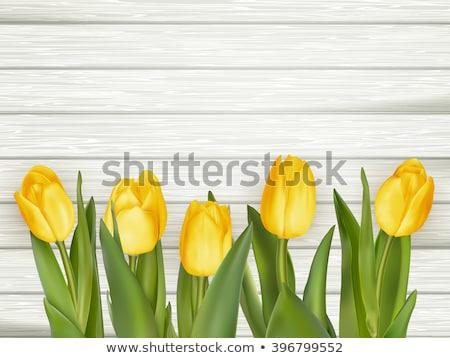 bouquet · bella · giallo · tulipani · eps · vettore - foto d'archivio © beholdereye