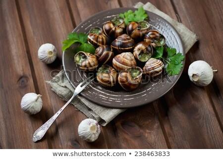 Bourgogne snail in studio Stock photo © cynoclub