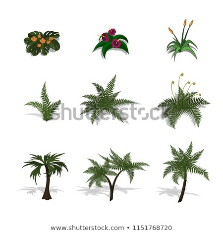 Palm isométrique style isolé tropicales arbre Photo stock © popaukropa