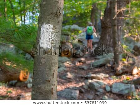 Trail blazing Stock photo © boggy