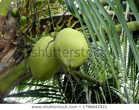 A variety of exotic fresh fruits and a palm branch on a blue background with copy space. Flat lay Stock photo © artjazz
